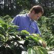 <p>GUATEMALA TEHUYA FARM</p>