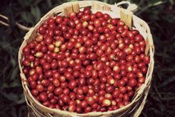 beans_red.jpg